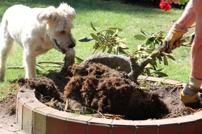 Gärtnerhilfe